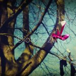 seaton-park-shoes